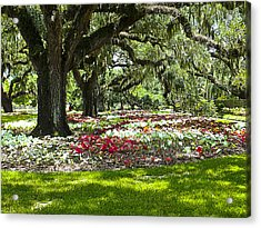 Acrylic Print featuring the photograph Live Oaks At Brookgreen Gardens by Bill Barber
