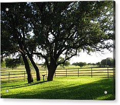 Live Oaks At Sunset Acrylic Print by Shawn Hughes