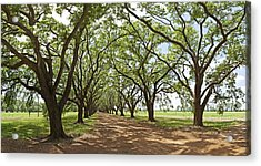 Live Oaks Country Road Acrylic Print