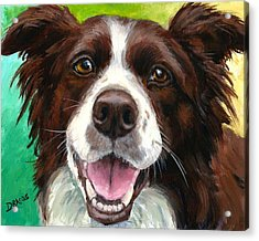 Liver And White Border Collie Acrylic Print