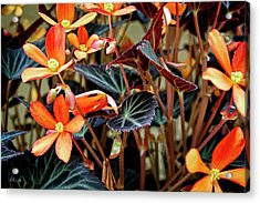 Living Tapestry Acrylic Print