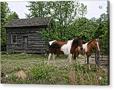 Livingston Cabin Acrylic Print