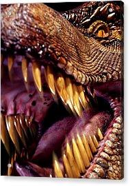 Lizard King Acrylic Print by Kelley King