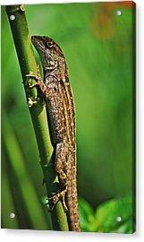 Lizard Acrylic Print by Michael Peychich