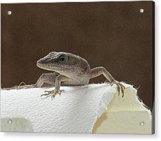 Lizard Acrylic Print by Michele Caporaso
