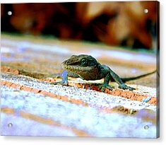 Lizard On A Brick Wall Acrylic Print by Jake Marvin