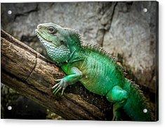 Lizard On Branch Acrylic Print