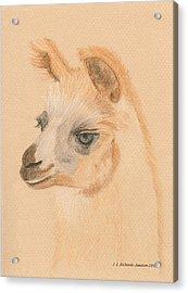 Llama Acrylic Print