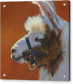 Acrylic Print featuring the painting Llama Love by Alecia Underhill