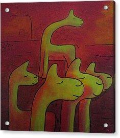 Llamas Looking Acrylic Print by Ingrid Russell
