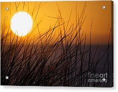 Llangennith Sun Acrylic Print