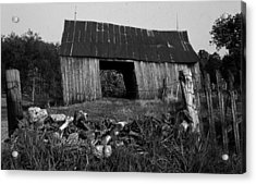 Lloyd-shanks-barn-4 Acrylic Print by Curtis J Neeley Jr