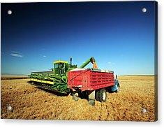 Load Of Wheat Acrylic Print by Todd Klassy