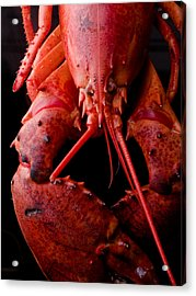 Lobster Acrylic Print by Jim DeLillo