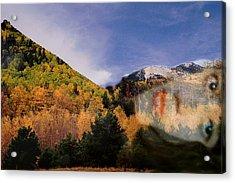 Lockett Meadow Looks Back Acrylic Print