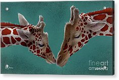Lofty Lovers... Acrylic Print