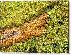 Log In Algae Acrylic Print