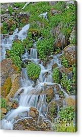 Logan Canyon Cascade Acrylic Print by Dennis Hammer