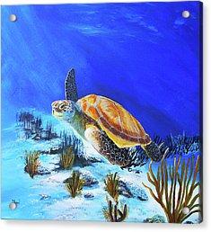 Loggerhead Sea Turtle Acrylic Print by John Moon