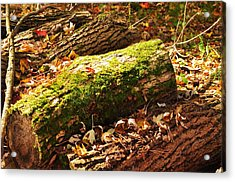 Logs  Acrylic Print by Puzzles Shum