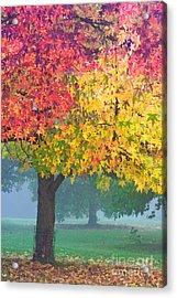 London Autumn Acrylic Print by David Bleeker