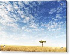 Lone Acacia Tree In The Masai Mara Acrylic Print