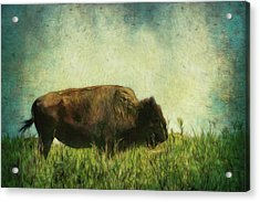 Acrylic Print featuring the photograph Lone Bison On The Prairie by Ann Powell