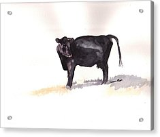Lone Black Angus Acrylic Print by Sharon Mick