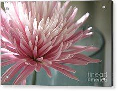 Lone Bloom Acrylic Print