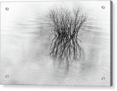 Lone Bush Acrylic Print
