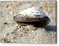 Lone Clam Acrylic Print by Mary Haber