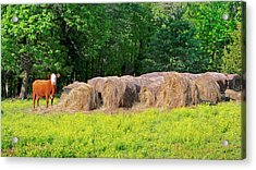 Lone Cow Guard, Smith Mountain Lake Acrylic Print