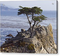 Lone Cypress Acrylic Print by Elvira Butler