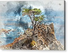 Lone Cypress In Monterey California Acrylic Print