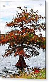 Acrylic Print featuring the photograph Lone Cypress Tree by KayeCee Spain