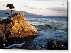 Lone Cypress Tree Acrylic Print by Michael Howell - Printscapes