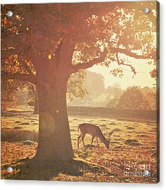 Acrylic Print featuring the photograph Lone Deer by Lyn Randle