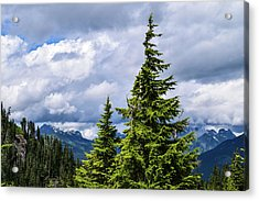 Lone Fir With Clouds Acrylic Print