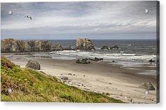 Lone Gull - Bandon Beach Acrylic Print
