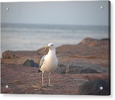Acrylic Print featuring the photograph Lone Gull by  Newwwman