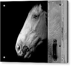 Lone Horse Acrylic Print