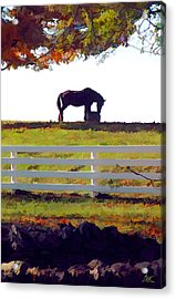 Equine Solitude Acrylic Print by Sam Davis Johnson