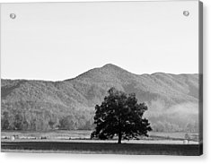 Acrylic Print featuring the photograph Lone Mountain Tree by Bob Decker