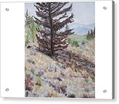 Lone Mountain Tree Acrylic Print by Hal Newhouser