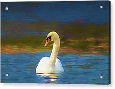 Lone Mute Swan. Acrylic Print