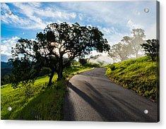 Lone Oak On Figueroa Mountain Road Acrylic Print