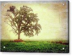 Lone Oak Tree In Fog Acrylic Print by Jennifer Rondinelli Reilly - Fine Art Photography