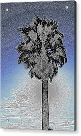 lone Palm 2 Acrylic Print