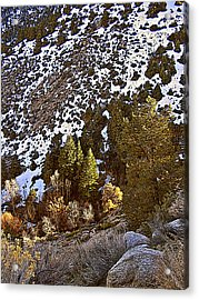 Lone Pine Creek Sunset Acrylic Print