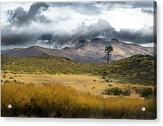 Acrylic Print featuring the photograph Lone Pine High Desert Nevada by Frank Wilson